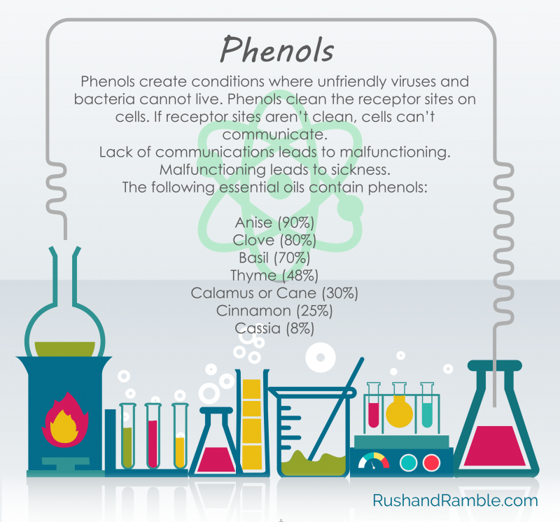 What Are Phenols